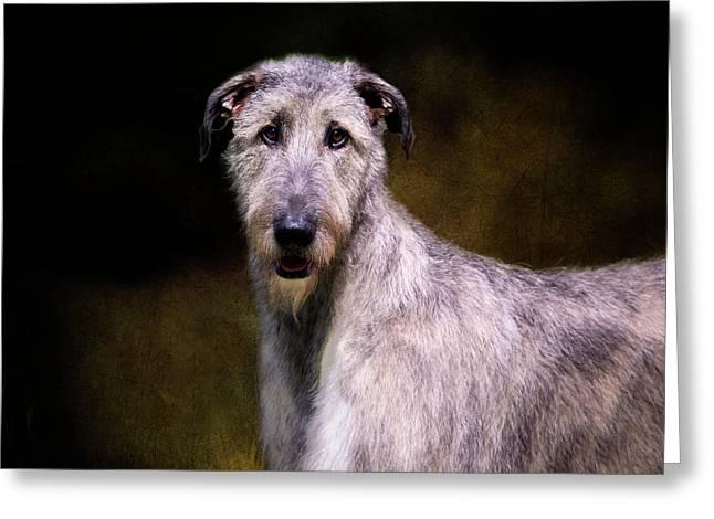 Irish Wolfhound Portrait Greeting Card