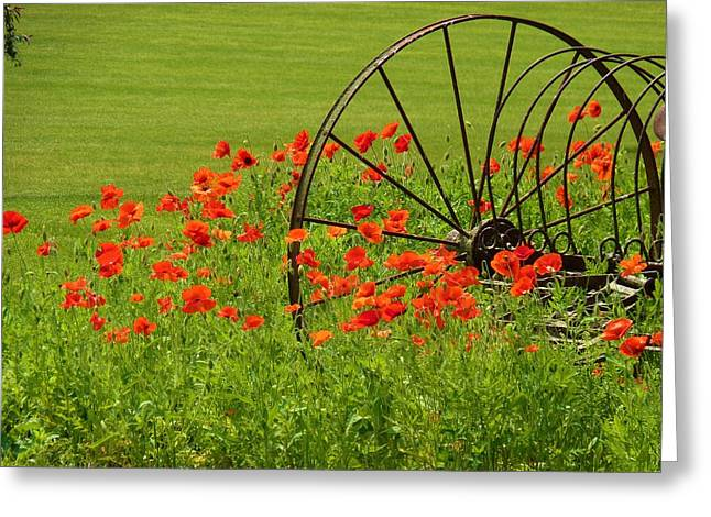 Iron Wheel With Orange Poppies Greeting Card by Jeanette Oberholtzer
