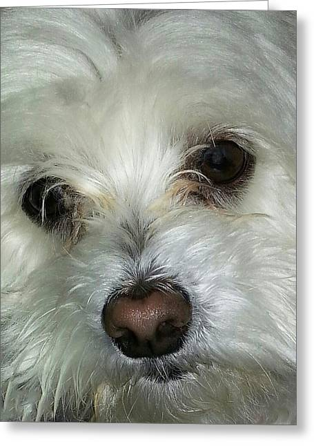 Irresistible Chloe Greeting Card by Emmy Marie Vickers