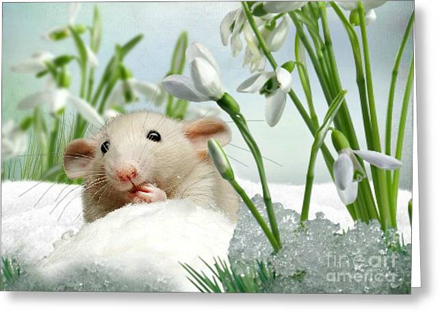 Is It Spring Yet ? Greeting Card