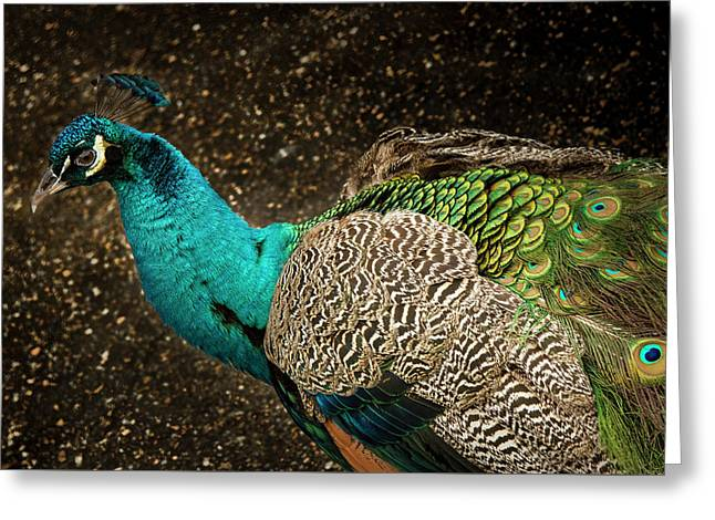 Greeting Card featuring the photograph Is She Looking ? by Jean Noren