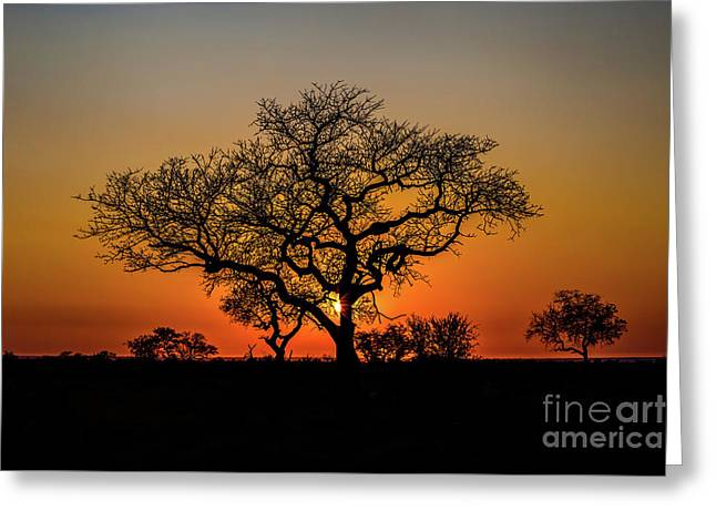 Isimangaliso Wetland Park Greeting Card