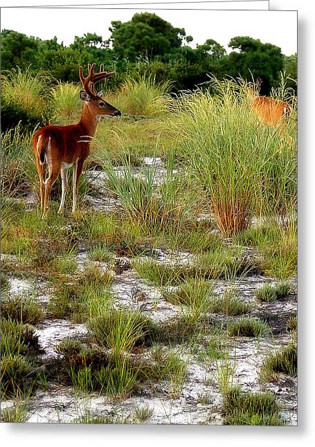 Island Deer Greeting Card by Michael Shreves