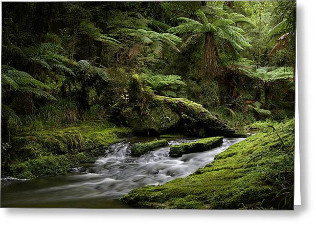 Islands Of Green 2 Greeting Card by Peter Prue