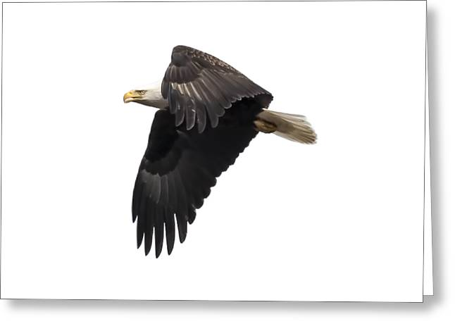 Isolated American Bald Eagle 2016-6 Greeting Card