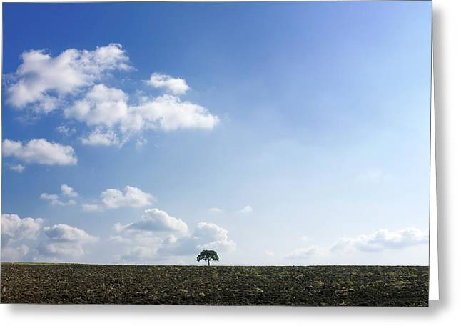 Isolated Tree Greeting Card
