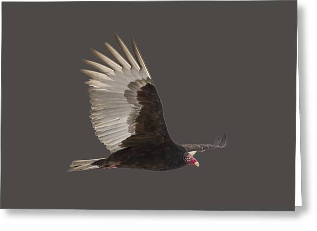 Isolated Turkey Vulture 2014-1 Greeting Card