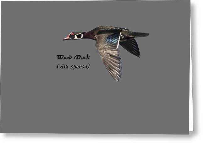 Isolated Wood Duck 2017-1 Greeting Card