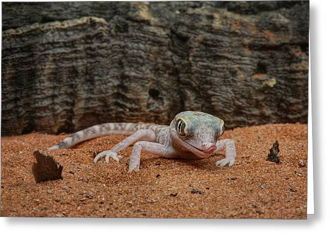 Greeting Card featuring the photograph Israeli Sand Gecko - 1 by Nikolyn McDonald