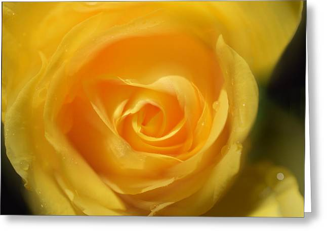 Greeting Card featuring the photograph It Is At The Edge Of The Petal That Love Waits by Douglas MooreZart