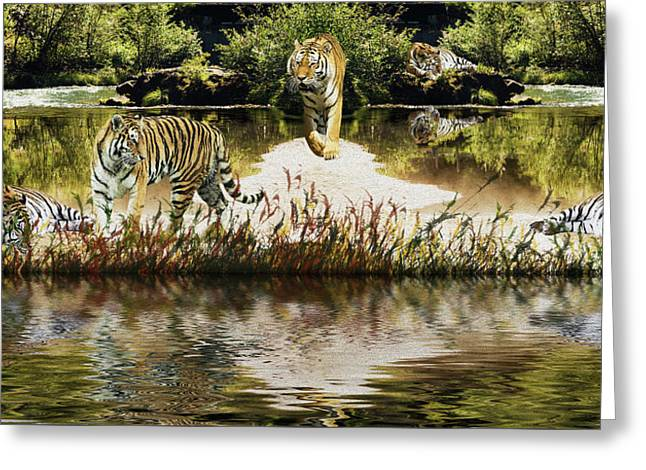 Greeting Card featuring the photograph It Must Be Time For A Tiger Nap by Diane Schuster