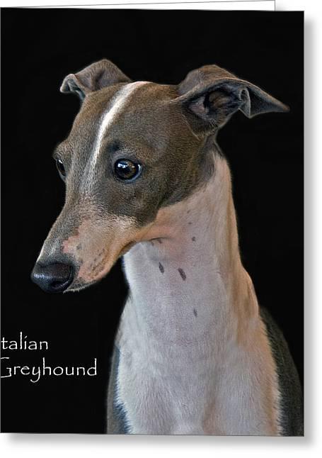 Italian Greyhound Greeting Card by Larry Linton