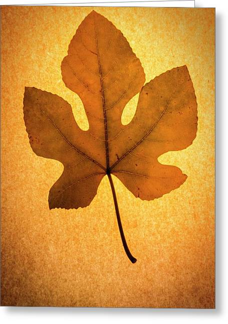 Greeting Card featuring the photograph Italian Honey Fig Leaf by Frank Wilson
