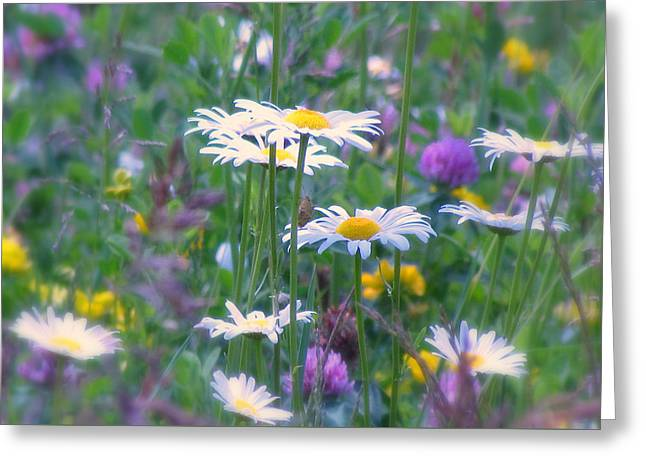 It's A Daisy Kind Of Day Greeting Card