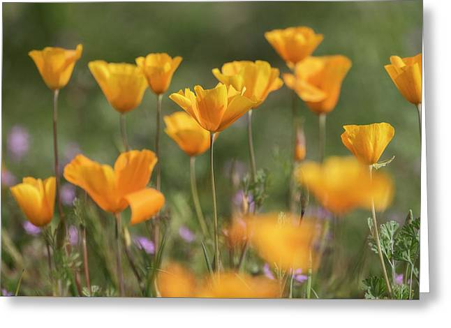 Greeting Card featuring the photograph It's A Poppy Thing  by Saija Lehtonen