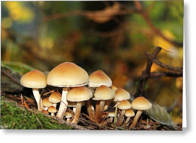 It's A Small World Mushrooms Greeting Card by Jennie Marie Schell