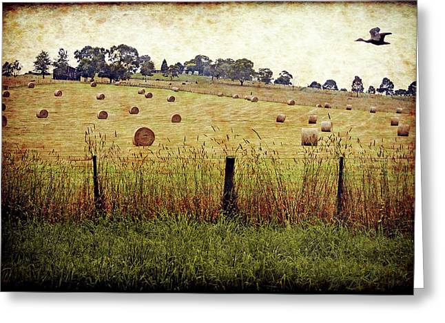 Greeting Card featuring the digital art Its Baling Time by Margaret Hormann Bfa