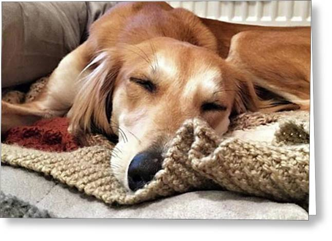 It's Been A Hard Day...  #saluki Greeting Card