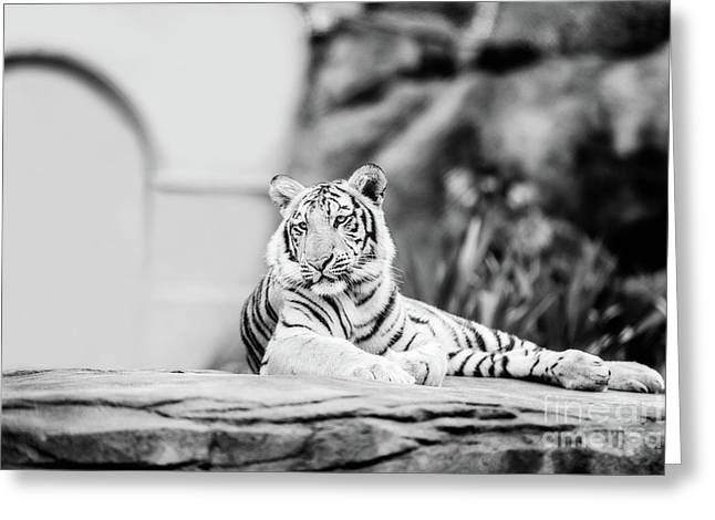 It's Great To Be King - Bw Greeting Card
