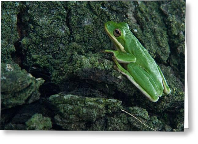 Its Hard To Be Green Greeting Card by Douglas Barnett
