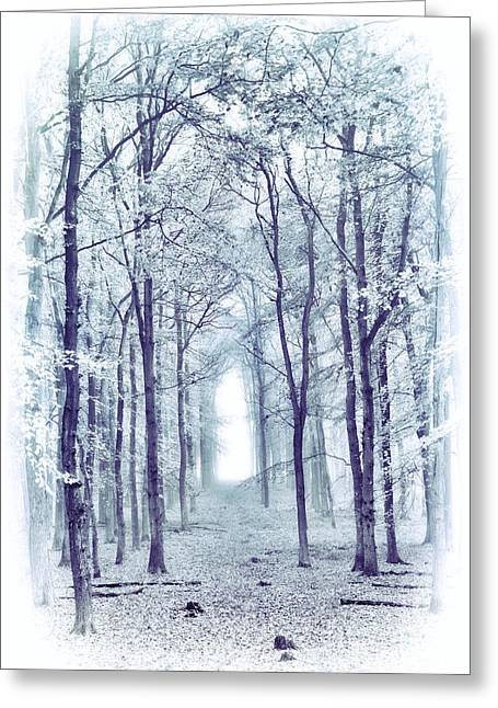 Its In The Trees Greeting Card by Tim Gainey