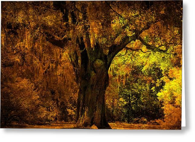 It's Not The Angel Oak Greeting Card by Susanne Van Hulst