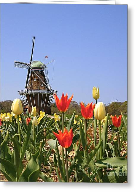 Its Tulip Time Greeting Card by Robert Pearson