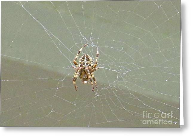 Itsy Bitsy Spider  Greeting Card by Crystal Loppie