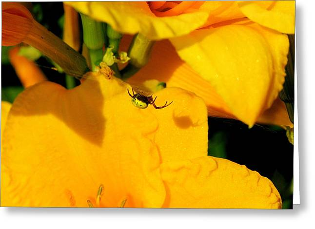 Itsy Bitsy Spider Greeting Card by Susan Moore