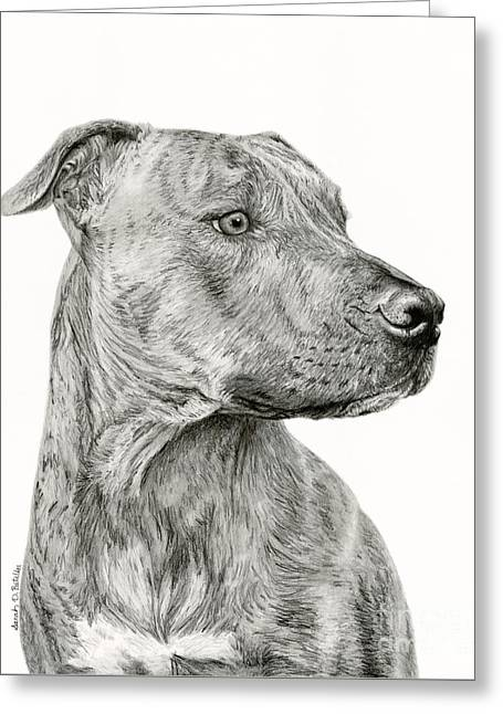 Ittie Bittie Pittie Greeting Card by Sarah Batalka