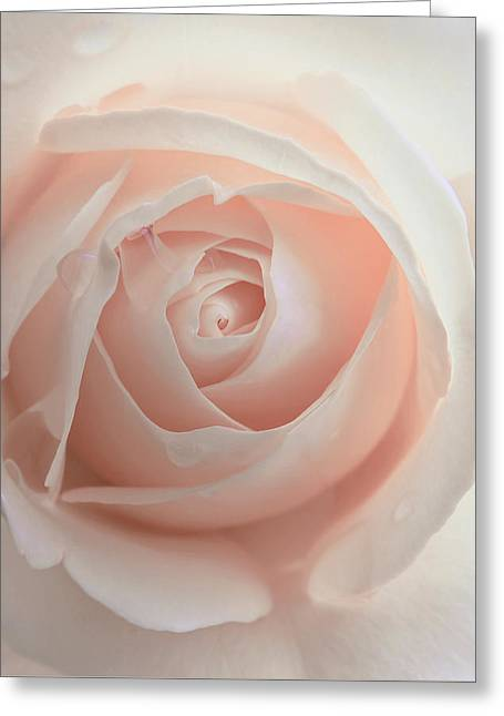 Ivory Peach Pastel Rose Flower Greeting Card by Jennie Marie Schell