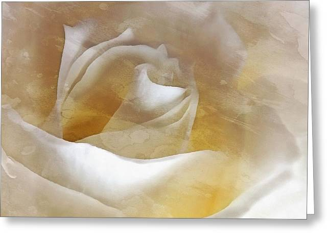 Ivory Rose - An Affair To Remember   Greeting Card by Janine Riley
