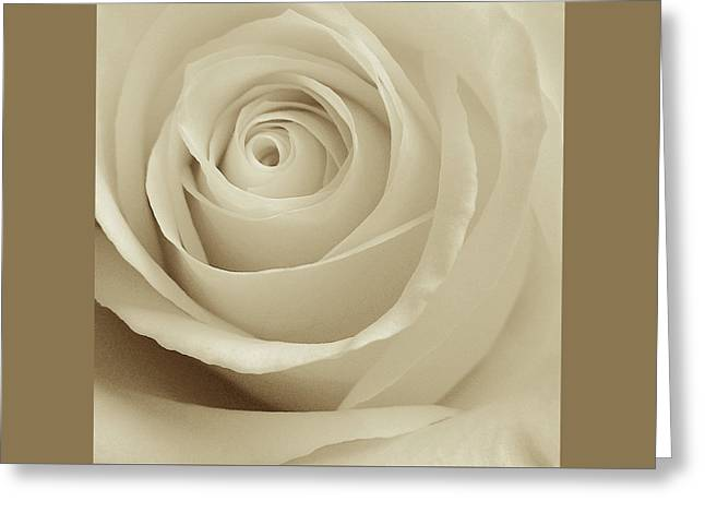 Ivory Rose Greeting Card
