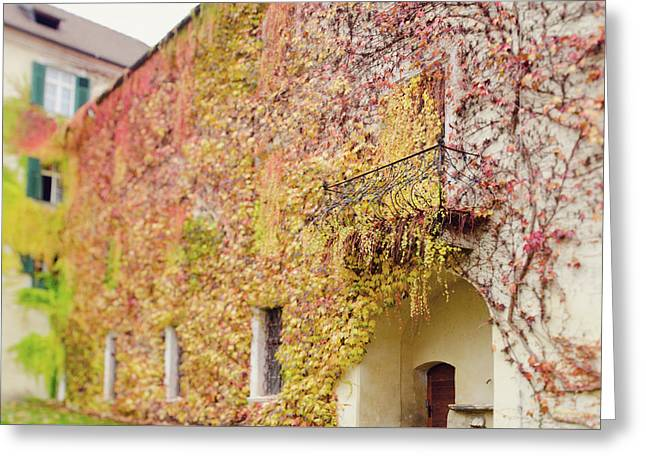 Ivy Covered Wall, Neustift Abbey, Bressanone Greeting Card by Margaret Goodwin