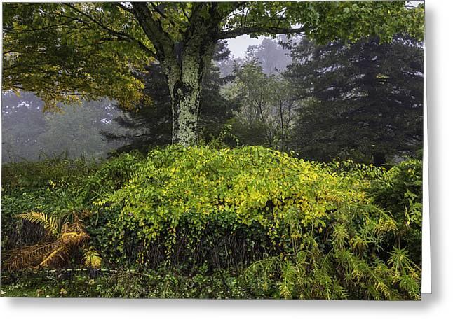 Ivy Garden Greeting Card