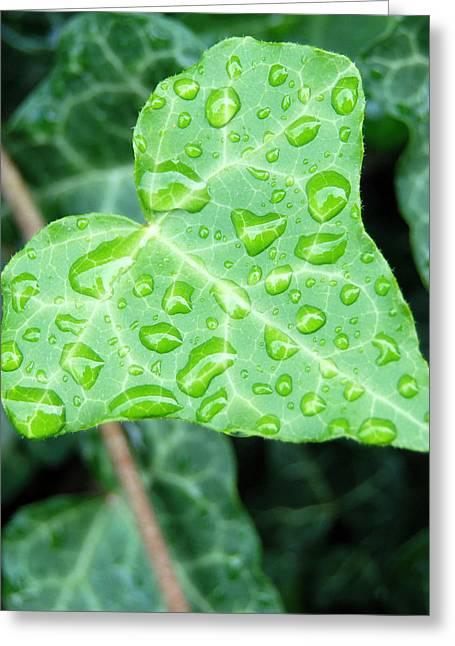 Ivy Leaf Greeting Card by Michael Peychich