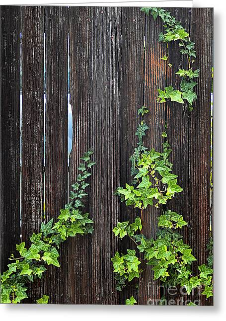Ivy On Fence Greeting Card by Clayton Bruster