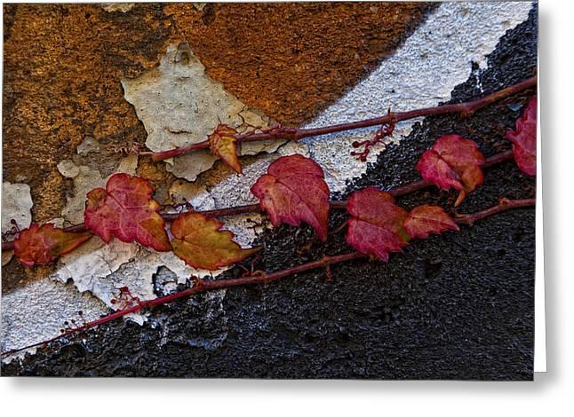 Ivy On Painted Wall Greeting Card by Robert Ullmann