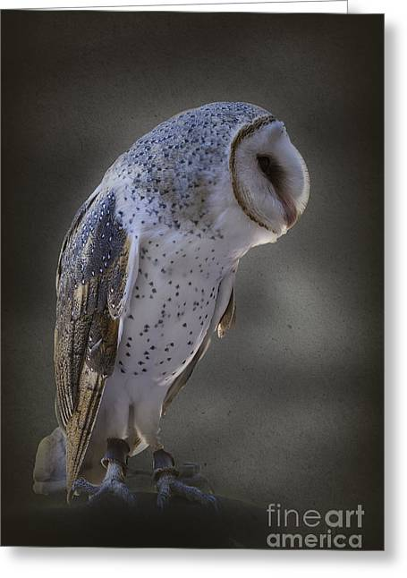 Ivy The Barn Owl Greeting Card