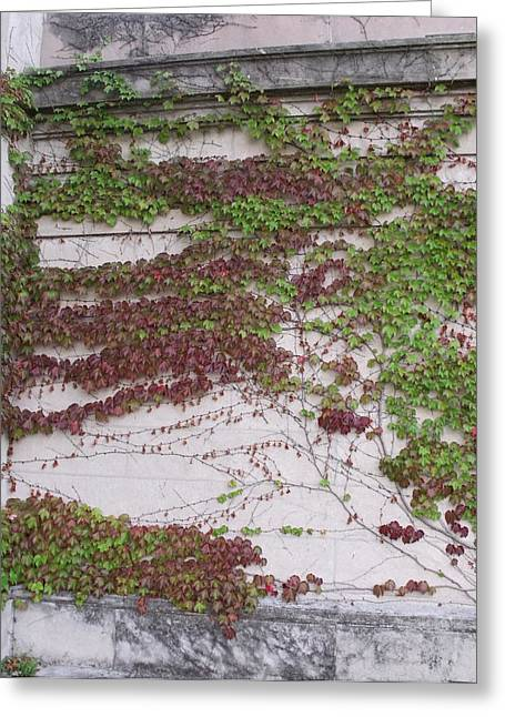 Ivy Wall I Greeting Card