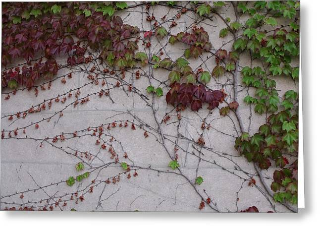 Ivy Wall II Greeting Card