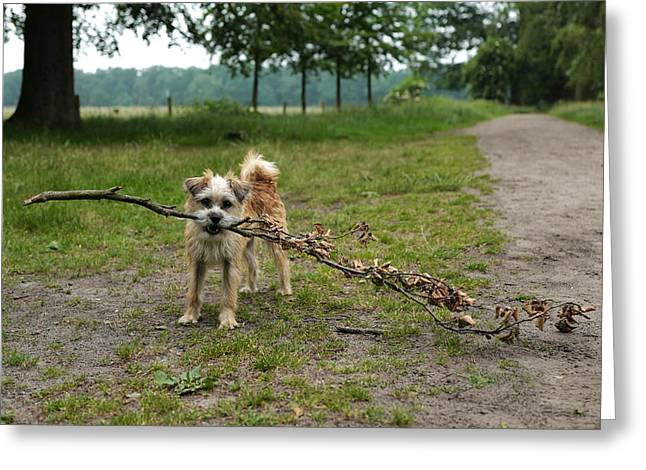 Dutch Dog With A Branch Greeting Card by Rona Black