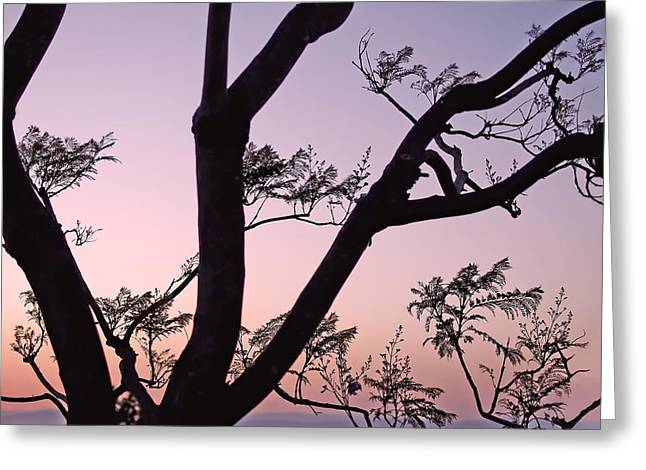 Jacaranda Silhouette Greeting Card
