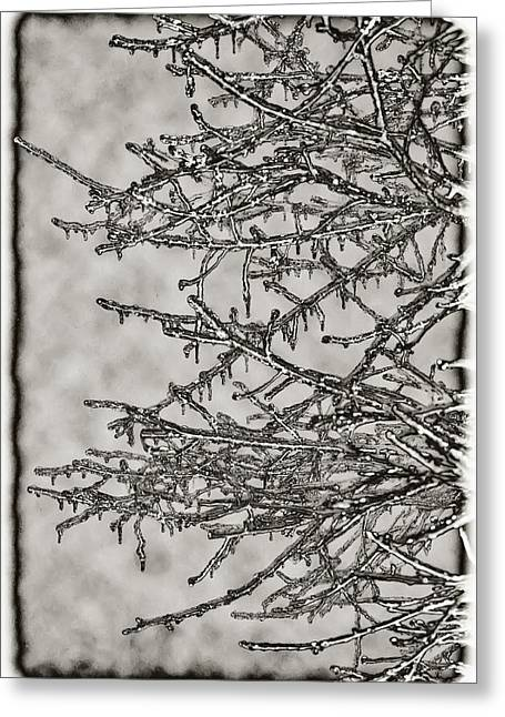 Jack Frost Greeting Card by Bill Cannon