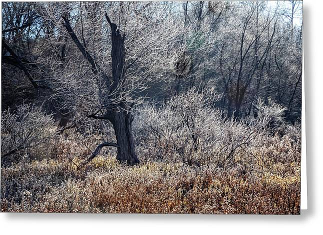Jack Frost Greeting Card by Debra and Dave Vanderlaan