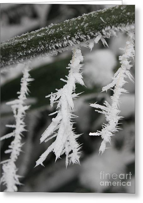 Jack Frost Was Here Greeting Card by Carol Groenen