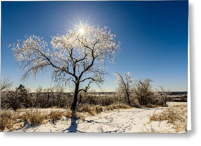 Jack Frost's Last Stand Greeting Card by Randy Scherkenbach