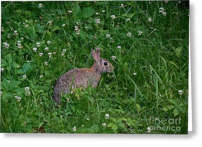 Jack Rabbit Greeting Card by Bob Schmidt