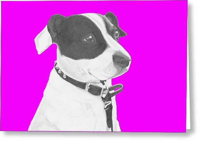Jack Russell Crossbreed In Pink Headshot Greeting Card by David Smith