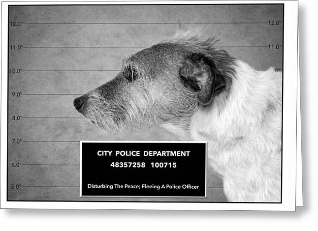 Jack Russell Terrier Mugshot - Dog Art - Black And White Greeting Card